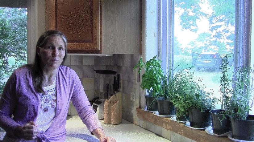 My kitchen windowsill serves as an indoor herb garden