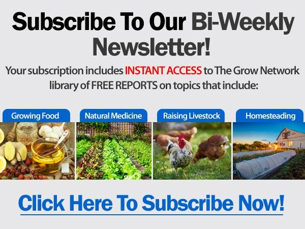 Subscribe to TGN's bi-weekly newsletter