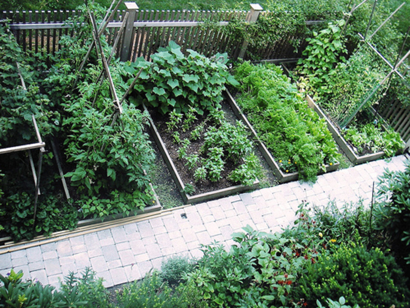 10 Reasons To Garden NOW!