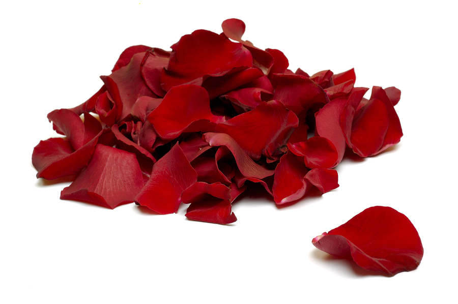 Bucket of loose red rose petals