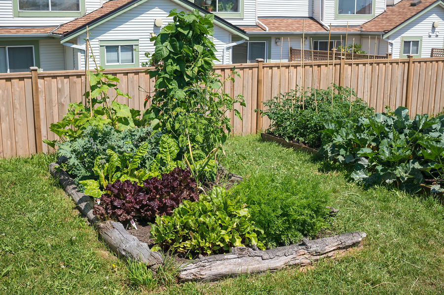 small-yard-big-garden