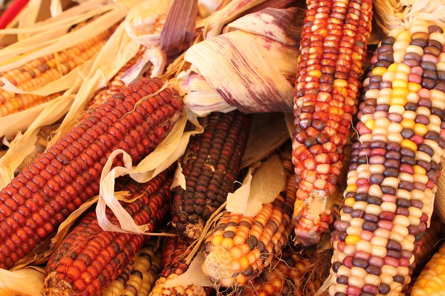 heirloom-native-american-corn-varieties