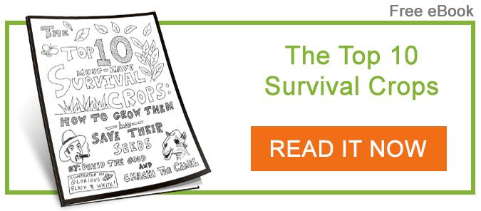 david-the-good-top-10-survival-crops