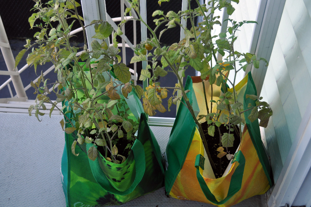Creative planters from cloth shopping bags