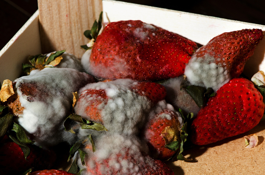 Compost boosters - box of moldy strawberries