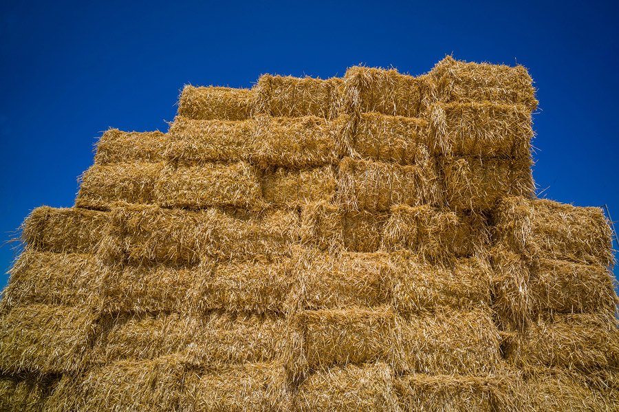 The Hidden Dangers Of Straw Bale Gardening The Grow Network The - Bales