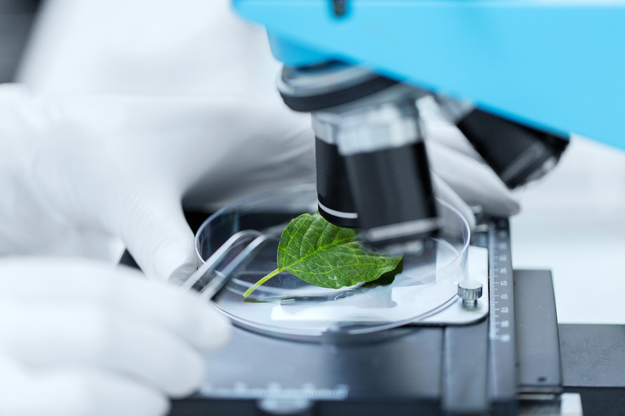 Scientist examining a leaf with a microscoper