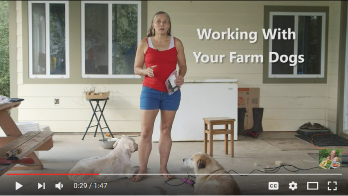 Working with Your Farm Dogs