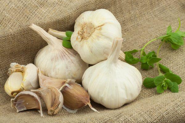 Natural antibiotic alternative garlic