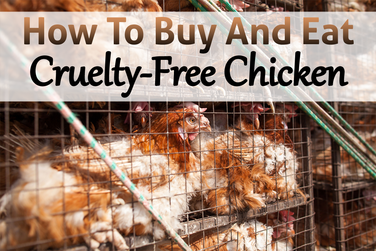 How To Buy And Eat Cruelty Free Organic Chicken