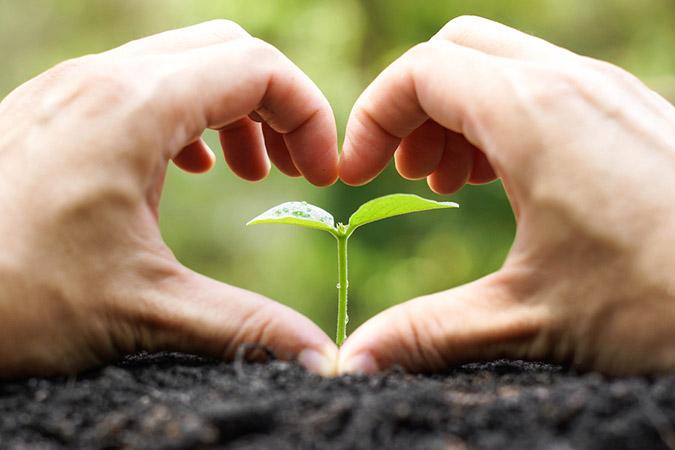 35+ Powerful, Inexpensive Organic Fertilizers You Can DIY
