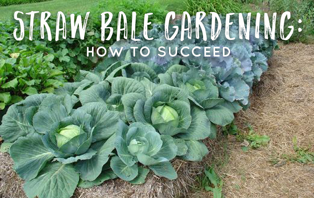 Straw Bale Gardening: How to Succeed - The Grow Network : The Grow ...