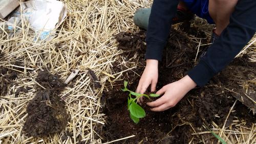 kids-gardening-boysindirt1