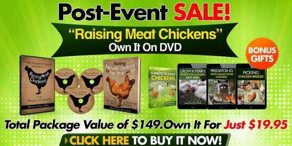 Raising Meat Chickens