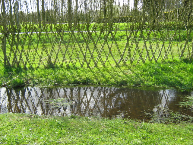 Living Fence Made Of Willows