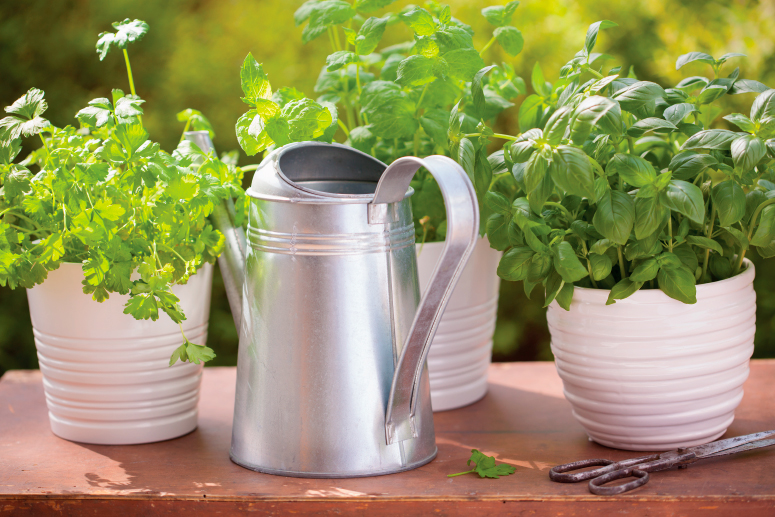 The Power of Herbs. How and why to grow an indoor herb garden. | The Grow Network