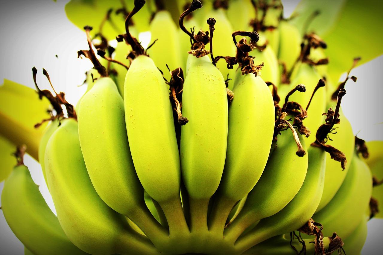 Banana Trees Growing Planting Cold