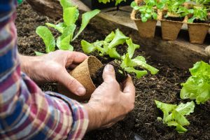 Instant Master Gardener Certification